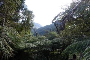 Aorangi forest