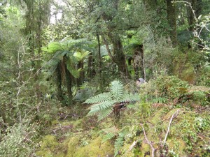 West coast rainforest