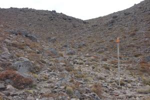 Blue marker poles