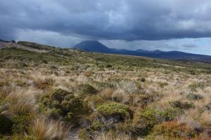 Vegetation restoration