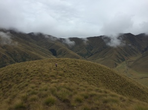 wet tussock and stormy skies
