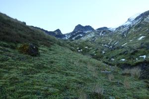 Taranaki alpine herbfields