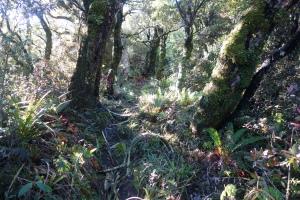 Goblin forest
